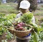Get rid of conventional farming methods! Consider these modern farming tips